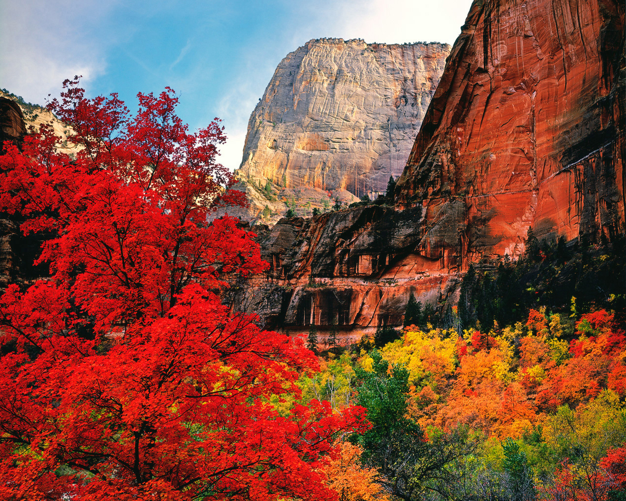 Off-season fall trees photograph in Zion Canyon